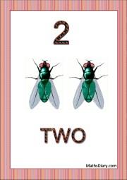 2 flies