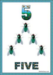 5 house flies
