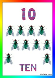 10 house flies
