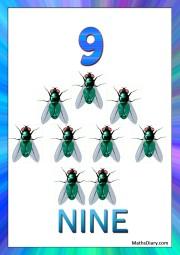 9 house flies